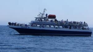 Dolphin Fleet Whale Watch Boat